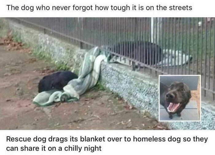 Dog - The dog who never forgot how tough it is on the streets Rescue dog drags its blanket over to homeless dog so they can share it on a chilly night