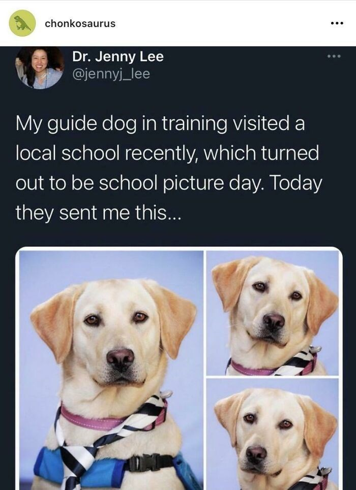 Dog - chonkosaurus Dr. Jenny Lee @jennyj_lee My guide dog in training visited a local school recently, which turned out to be school picture day. Today they sent me this...