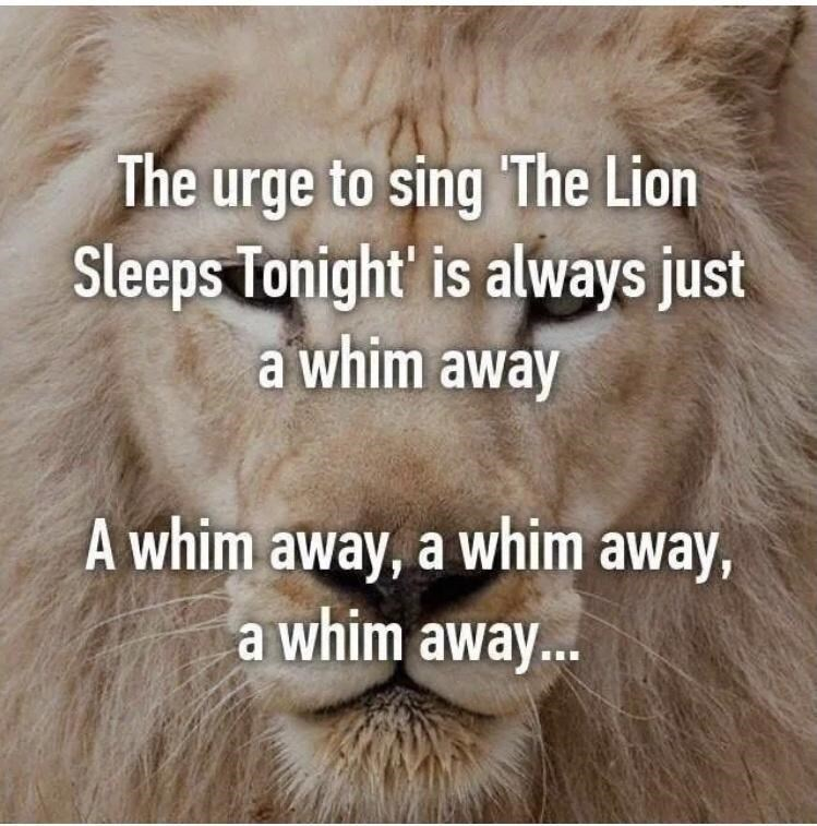 Carnivore - The urge to sing The Lion Sleeps Tonight' is always just a whim away A whim away, a whim away, a whim away..