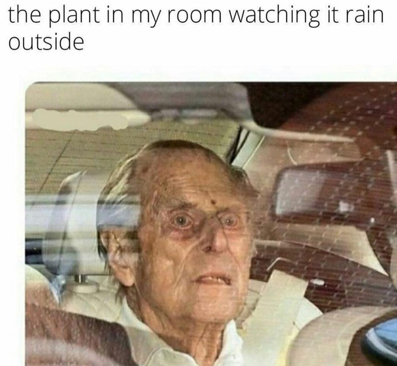 Forehead - the plant in my room watching it rain outside