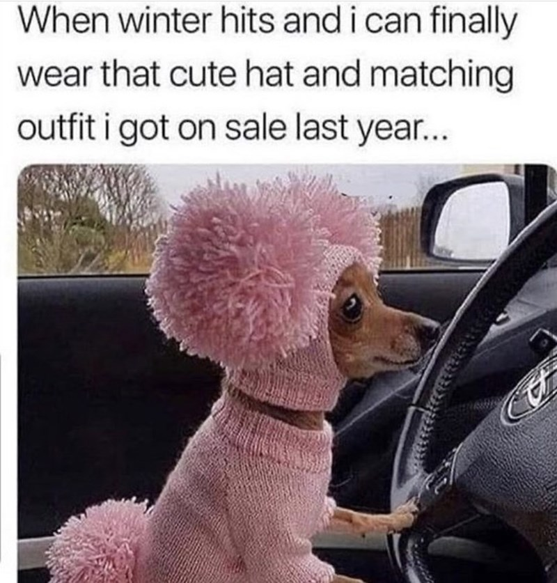 Dog - When winter hits and i can finally wear that cute hat and matching outfit i got on sale last year...