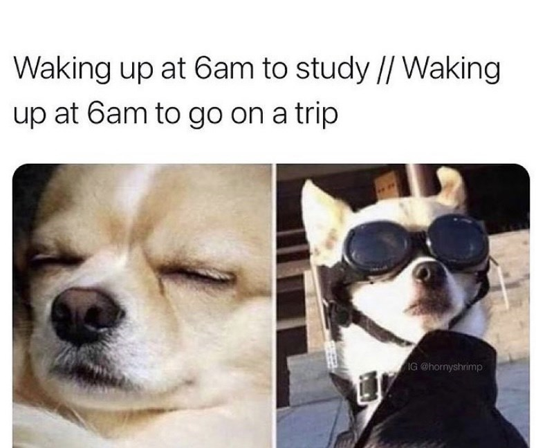 Dog - Waking up at 6am to study // Waking up at 6am to go on a trip IG @hornyshrimp