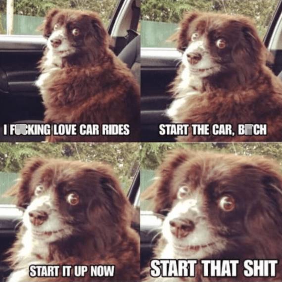 Dog - I FUCKING LOVE CAR RIDES START THE CAR, BTCH START IT UP NOW START THAT SHIT