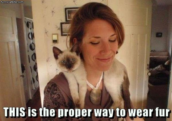 cat memes - 9611034880