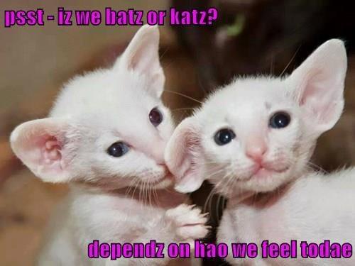 cat memes - 9611035136