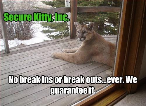 animal memes - 9611035904