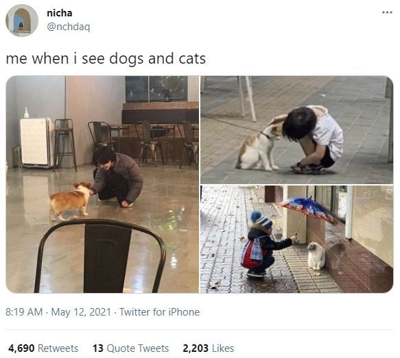 Shirt - nicha .... @nchdaq me when i see dogs and cats 8:19 AM May 12, 2021 Twitter for iPhone 4,690 Retweets 13 Quote Tweets 2,203 Likes
