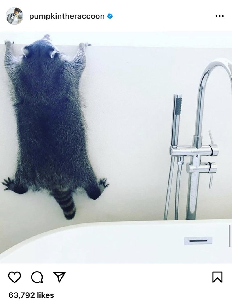 Sink - pumpkintheraccoon ... 63,792 likes