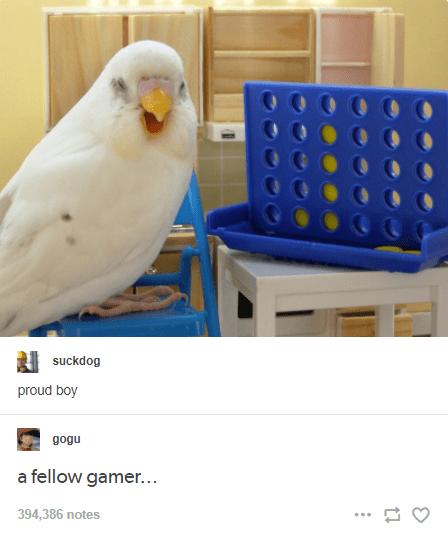 Bird - suckdog proud boy gogu a fellow gamer... 394,386 notes ...