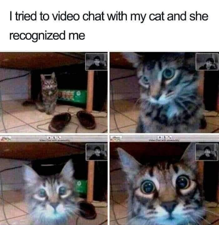 Cat meme - Cat - I ried to video chat with my cat and she recognized me