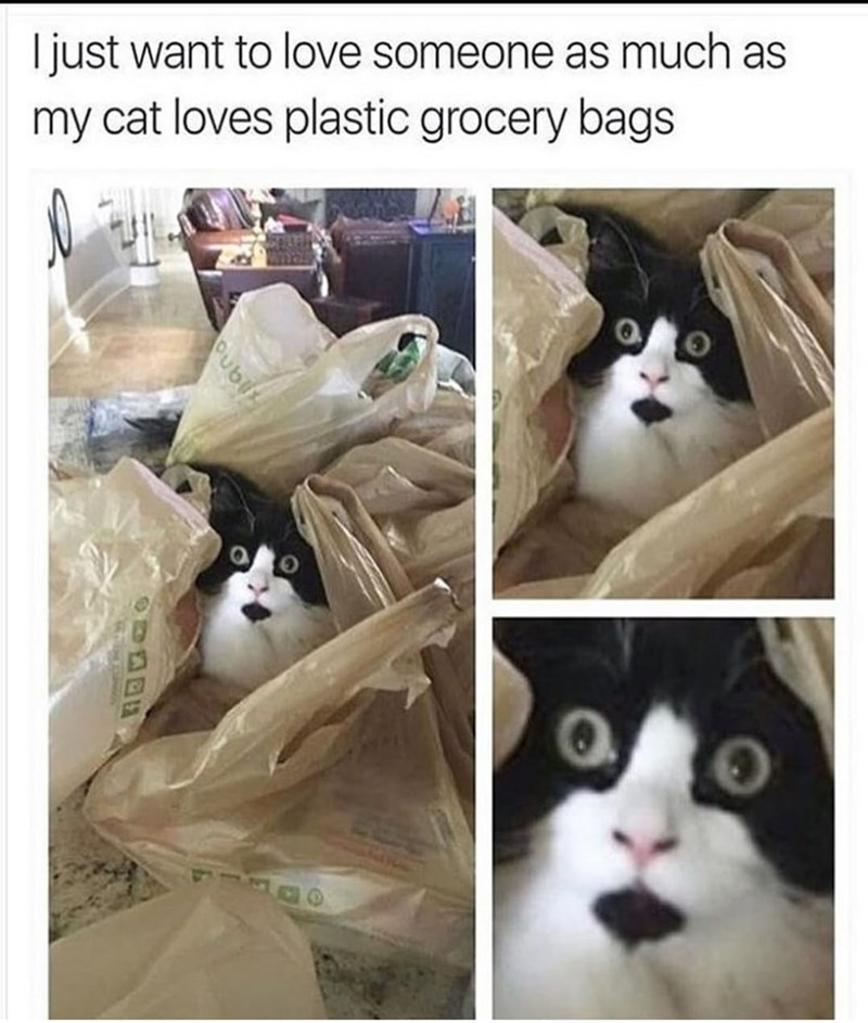Cat meme - Cat - I just want to love someone as much as my cat loves plastic grocery bags Oubli