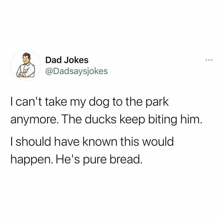 Font - Dad Jokes ... @Dadsaysjokes I can't take my dog to the park anymore. The ducks keep biting him. I should have known this would happen. He's pure bread.