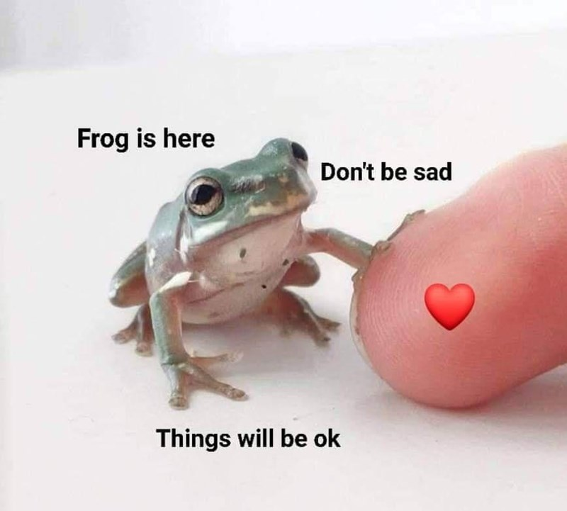 Frog - Frog is here Don't be sad Things will be ok