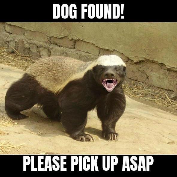 Organism - DOG FOUND! PLEASE PICK UP ASAP