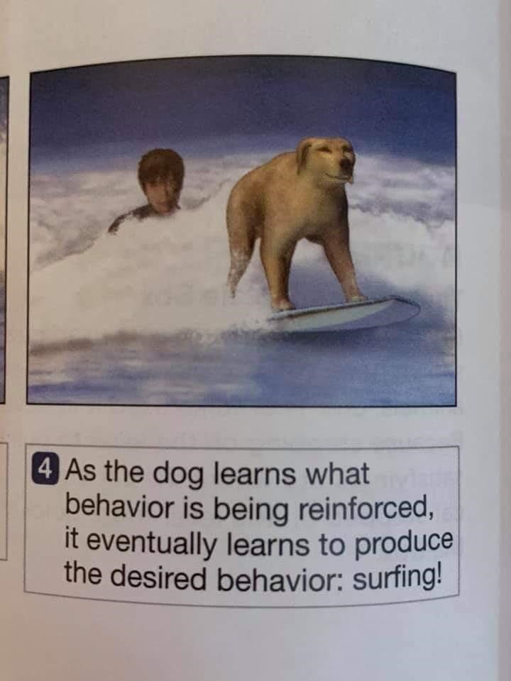 Vertebrate - 4 As the dog learns what behavior is being reinforced, it eventually learns to produce the desired behavior: surfing!