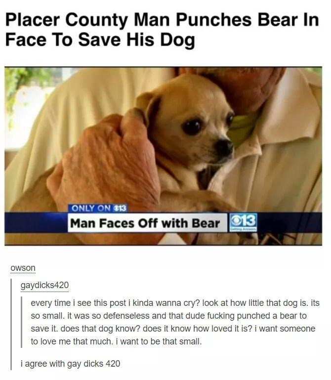 Dog - Placer County Man Punches Bear In Face To Save His Dog ONLY ON $13 Man Faces Off with Bear 13 owson gaydicks420 every time i see this post i kinda wanna cry? look at how little that dog is. its so small. it was so defenseless and that dude fucking punched a bear to save it. does that dog know? does it know how loved it is? i want someone to love me that much. i want to be that small. i agree with gay dicks 420
