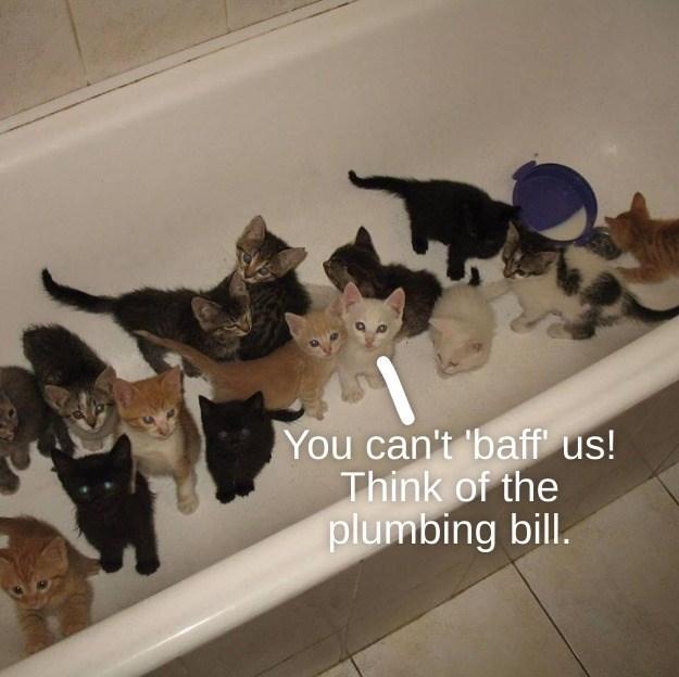 cat memes - 9611560704