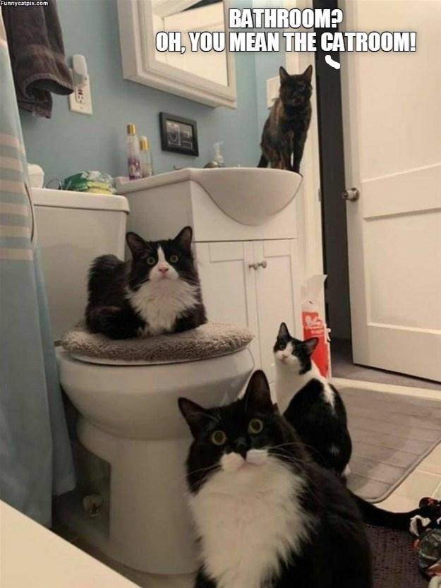 cat memes - 9611561216