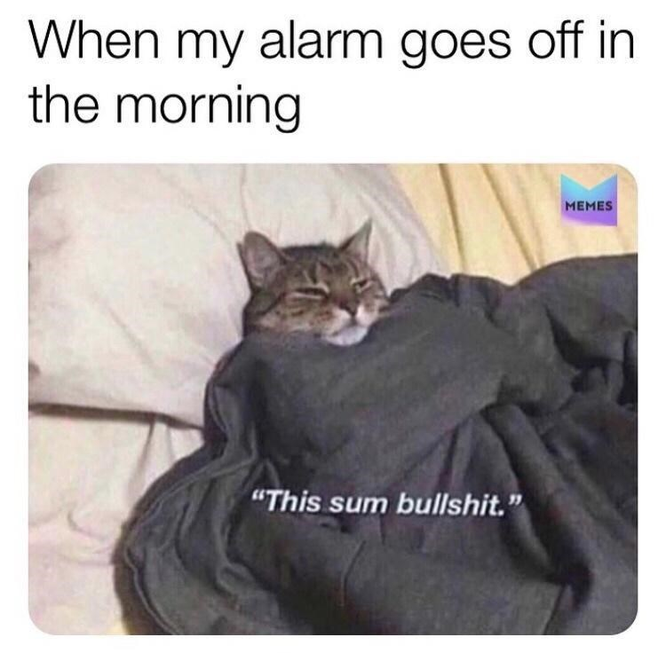 """Cat - When my alarm goes off in the morning MEMES """"This sum bullshit."""""""