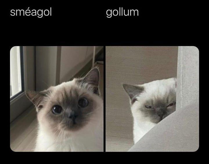 Cat - sméagol gollum