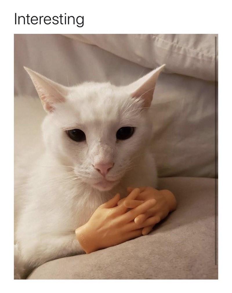 Cat - Interesting