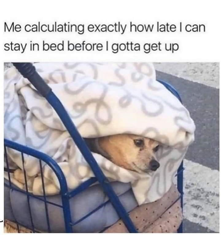 Dog - Me calculating exactly how late l can stay in bed before I gotta get up