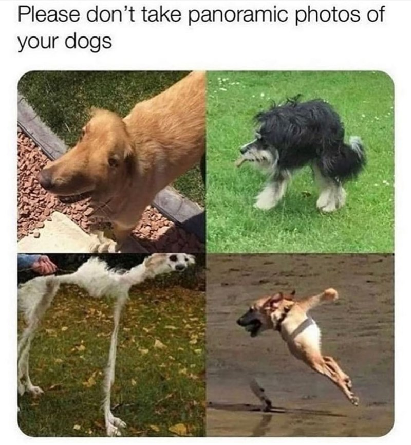 Dog - Please don't take panoramic photos of your dogs