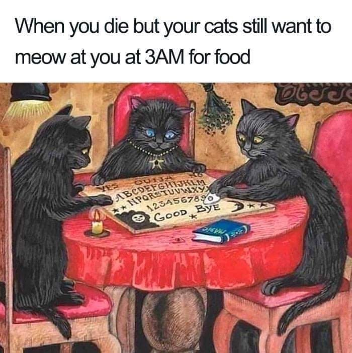 Furniture - When you die but your cats still want to meow at you at 3AM for food OU13 ABCDEFGHIJKLM 1234567890 GOOD BYE *NPORSTUVWXY
