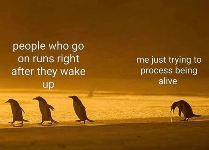 Bird - people who go on runs right after they wake me just trying to process being alive up
