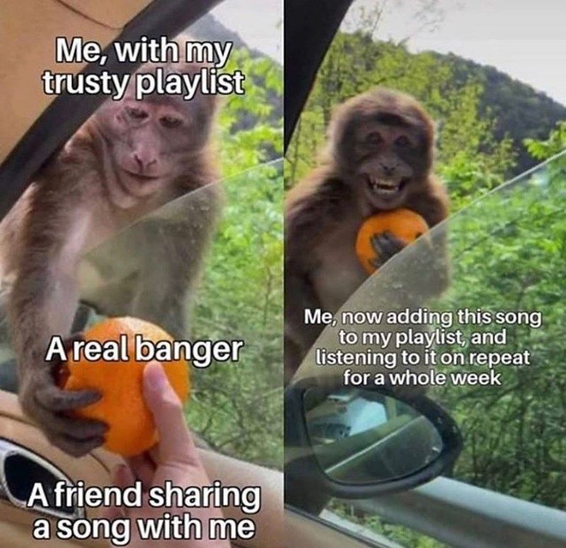 Primate - Me, with my trusty playlist A real banger Me, now adding this song to my playlist, and listening to it on repeat for a whole week A friend sharing a song with me