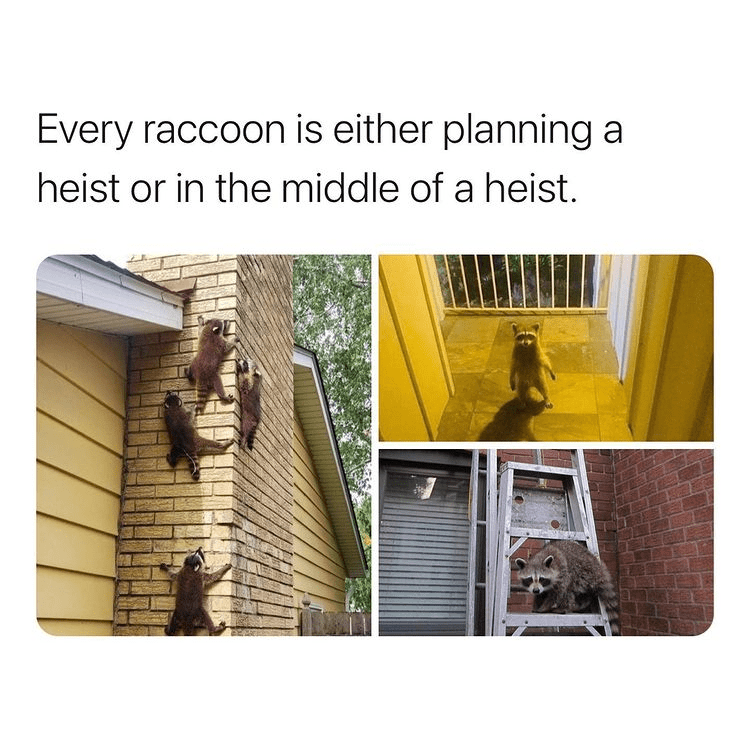 Line - Every raccoon is either planning a heist or in the middle of a heist.
