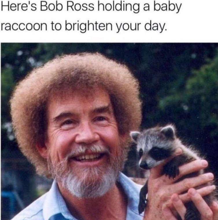 Smile - Here's Bob Ross holding a baby raccoon to brighten your day.