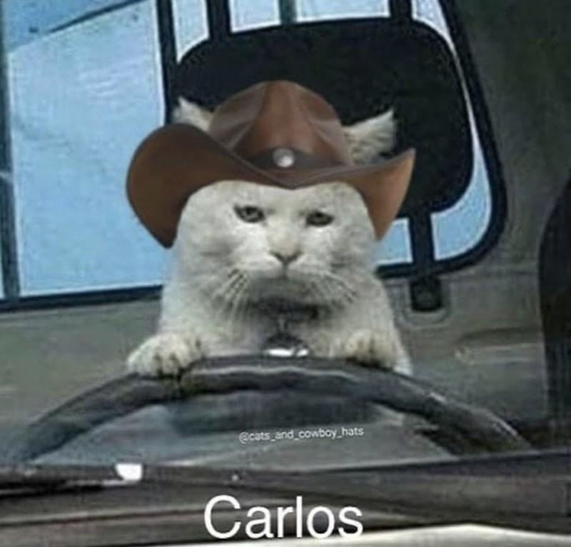 Cat - @cats and cowboy_hats Carlos
