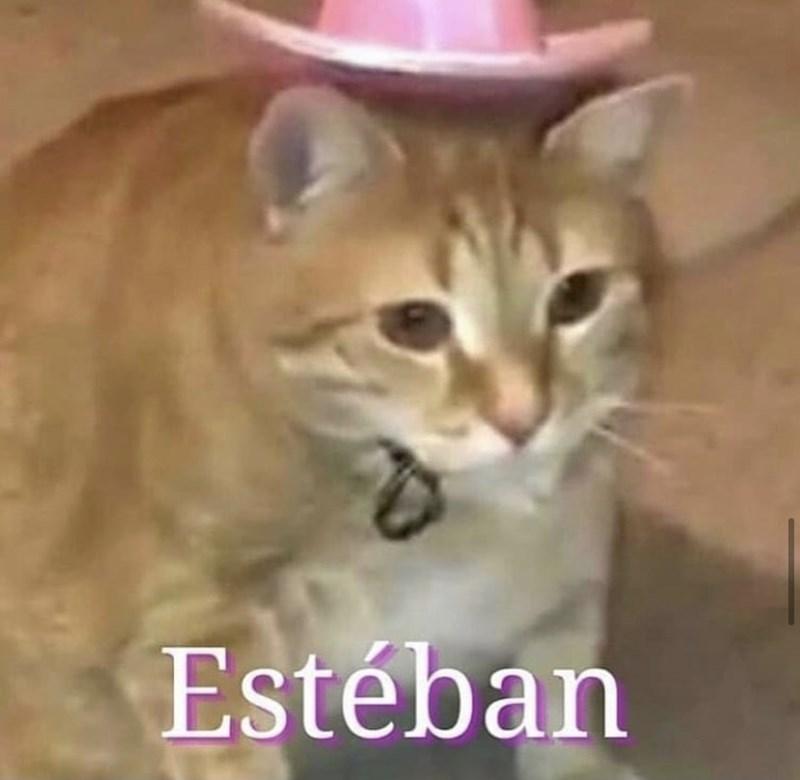 Cat - Estéban