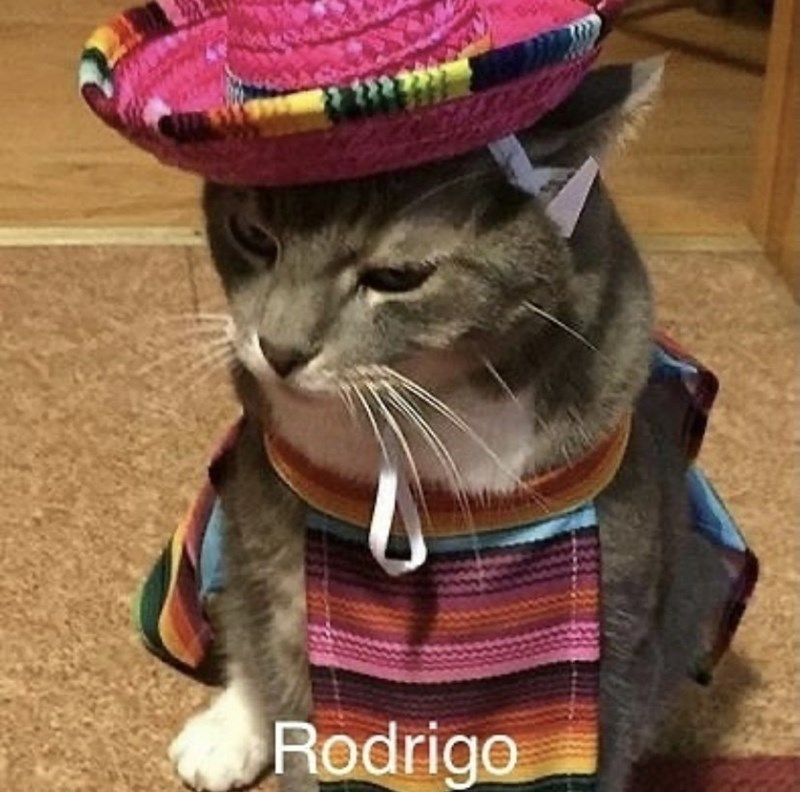 Cat - Rodrigo