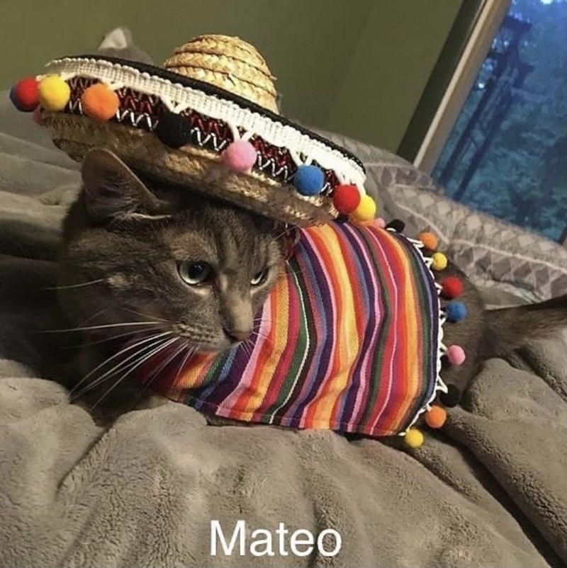 Cat - Mateo