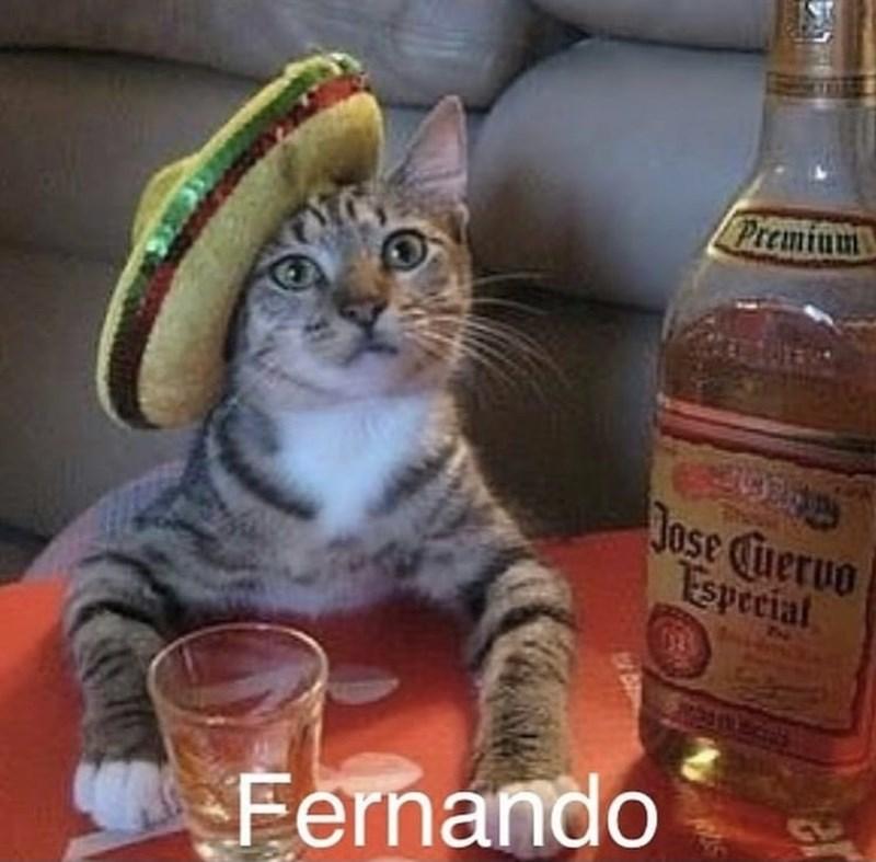Cat - Premium Jose Cuervo Especial 13 Fernando