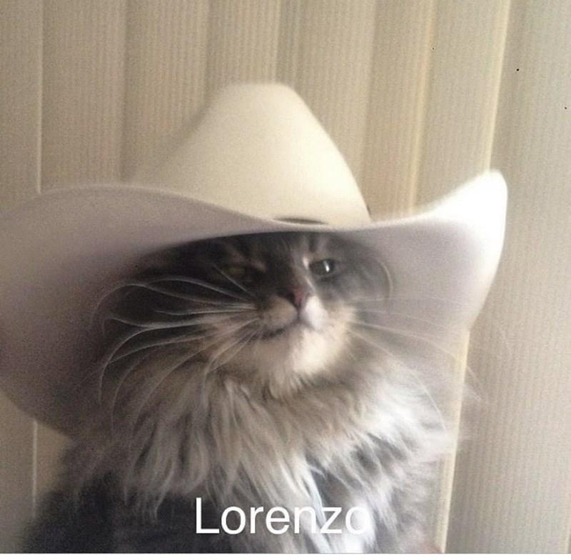 Head - Lorenzo