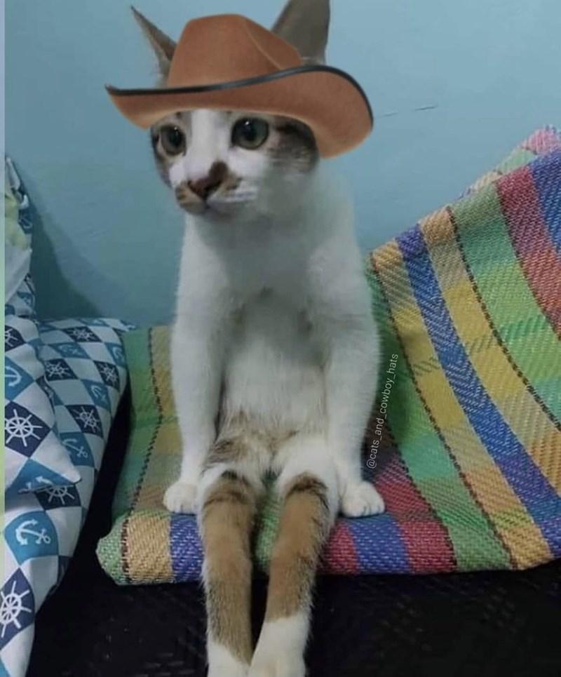 Cat - @cats_and cowboy_hats