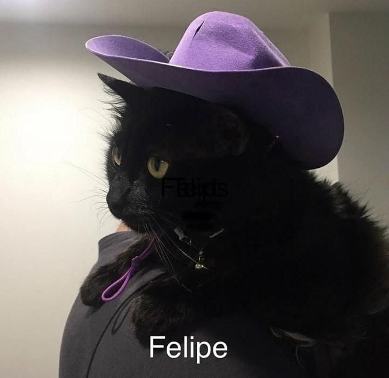 Cat - FEdids Felipe