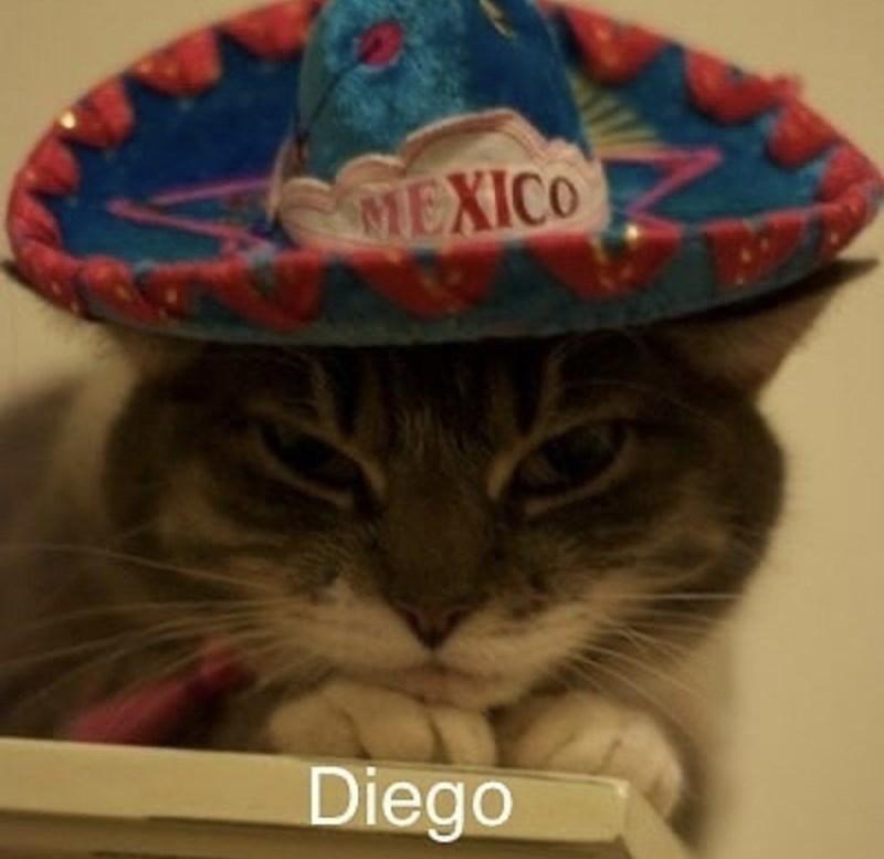 Cat - MEXICO Diego