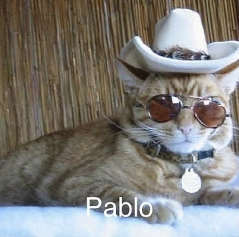 Cat - Pablo
