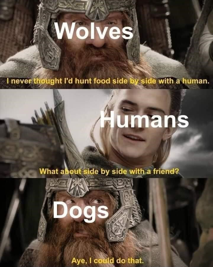 Plant - Wolves I never thought l'd hunt food side by side with a human. Humans What about side by side with a friend? Dogs Aye, I could do that.