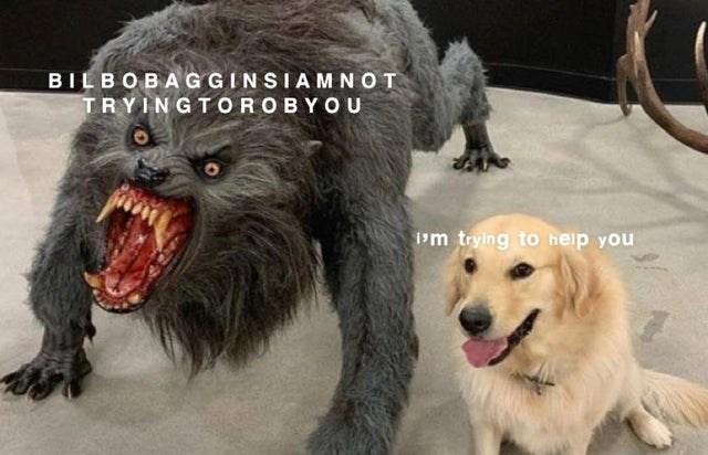 Dog - BILBOBAGGINSIAMNOT TRYINGTOROBYOU m trying to help you