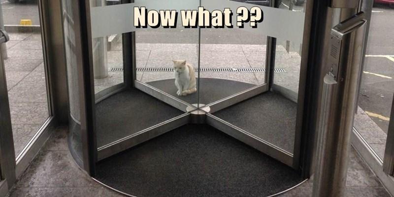 cat memes - 9611922432