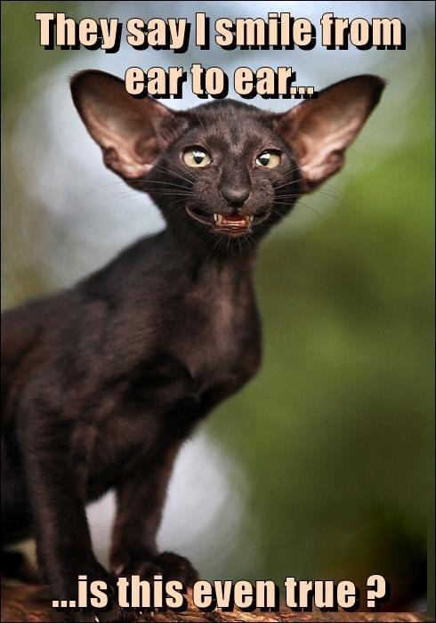 cat memes - 9611922688