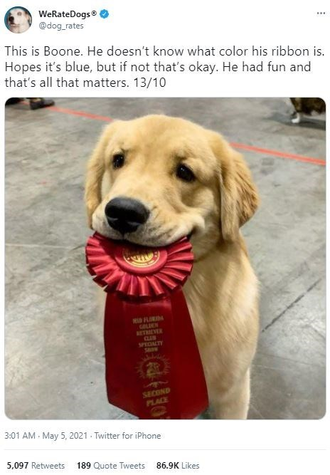 Dog - WeRateDogs @dog_rates ... This is Boone. He doesn't know what color his ribbon is. Hopes it's blue, but if not that's okay. He had fun and that's all that matters. 13/10 MID FLIDA GALICN BETREVER CLUB SPECIALTY Sow SECOND PLACE 3:01 AM - May 5, 2021 - Twitter for iPhone 5,097 Retweets 189 Quote Tweets 86.9K Likes