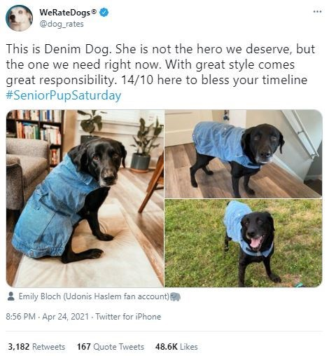 Dog - WeRateDogs @dog_rates ... This is Denim Dog. She is not the hero we deserve, but the one we need right now. With great style comes great responsibility. 14/10 here to bless your timeline #SeniorPupSaturday Emily Bloch (Udonis Haslem fan account) 8:56 PM · Apr 24, 2021 . Twitter for iPhone 3,182 Retweets 167 Quote Tweets 48.6K Likes
