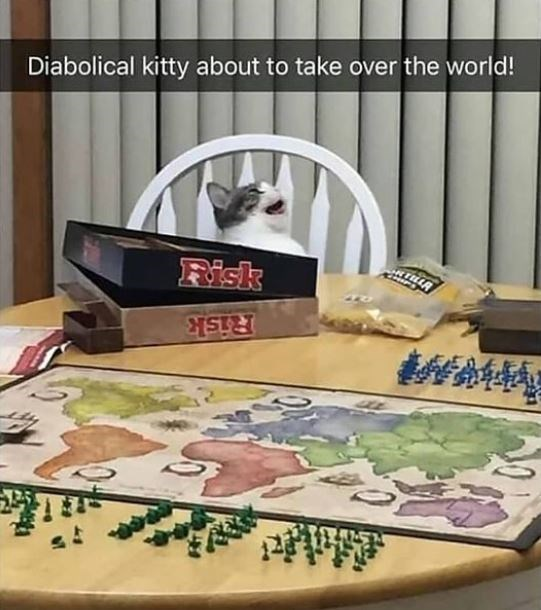 Table - Diabolical kitty about to take over the world! Risk 轉 Risk