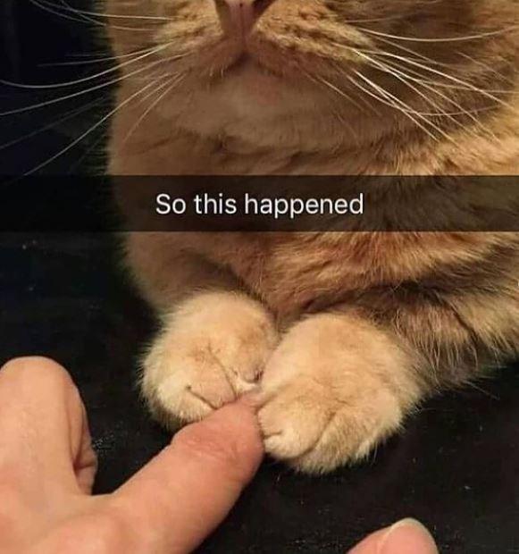 Cat - So this happened